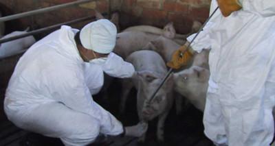 Aplicador – manipulador de plagicidas de uso ganadero – Biocidas – (niveles básico y cualificado)