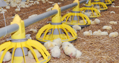 Control sanitario y aplicación en ganado ecológico