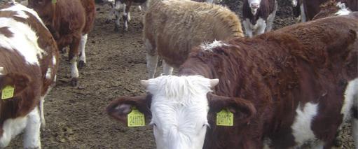 Certificados de bienestar animal para transportistas y ganaderos