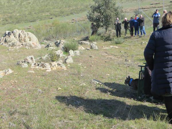 Extremadura refuerza la genética de sus linces con la liberación de cinco ejemplares procedentes de Portugal y Andalucía